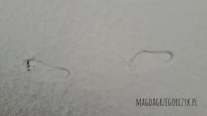 stopy-na-sniegu